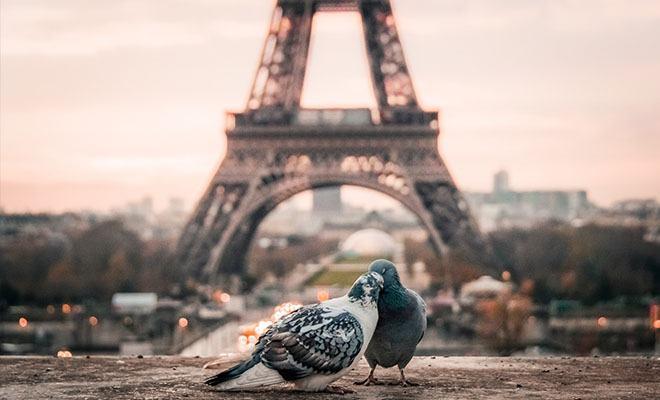 два голубя перед эйфелевой башней